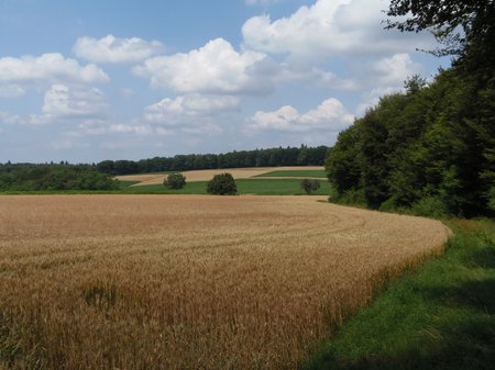 Juli 2019 -15 - Obergromb-Höhenrw 001